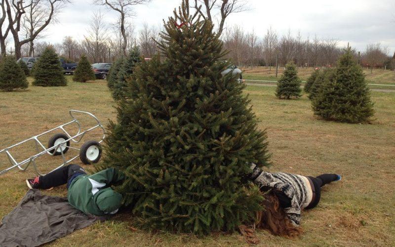 The Annual Christmas Tree Cutting Ritual