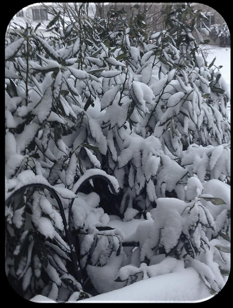 Curse You, Winter Storm Hercules!