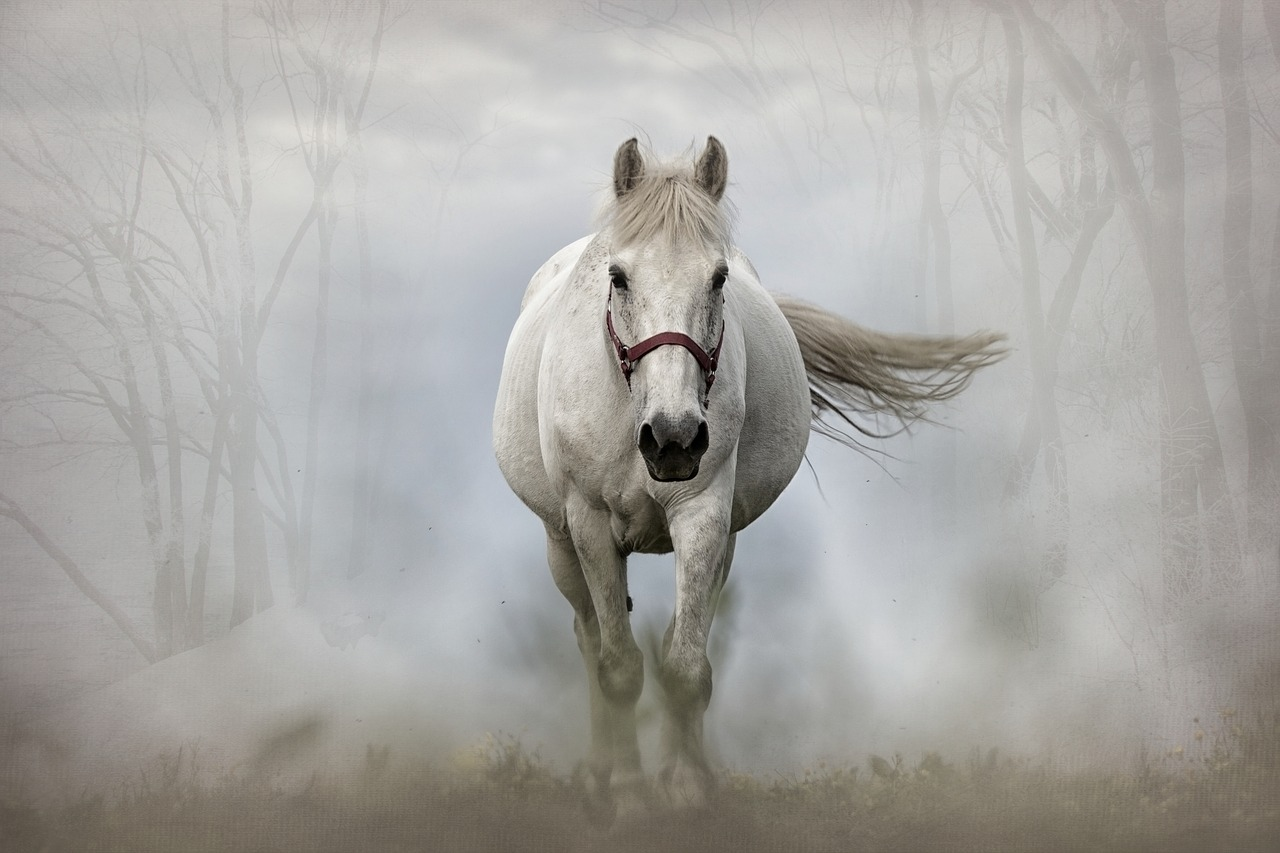 A White Horse In Ireland